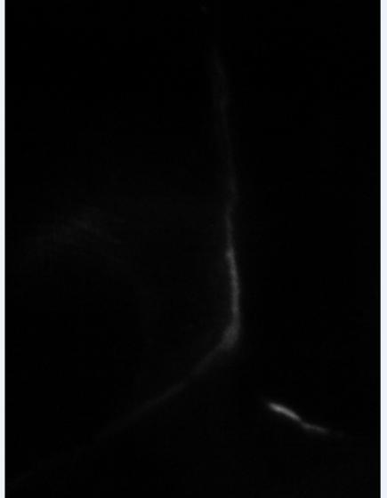dark53